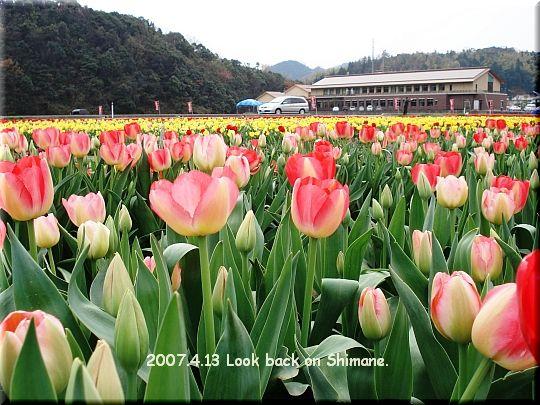 2007.04.13安来市チューリップ畑3.JPG