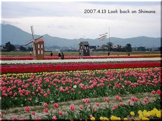 2007.04.13斐川町今在家チューリップ畑3.JPG