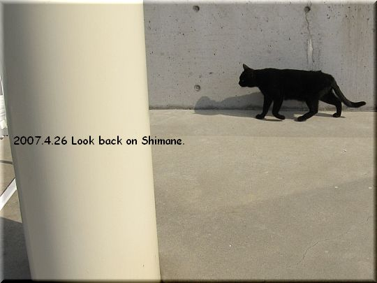 2007.04.26蒜山ジャージーランド猫2.JPG