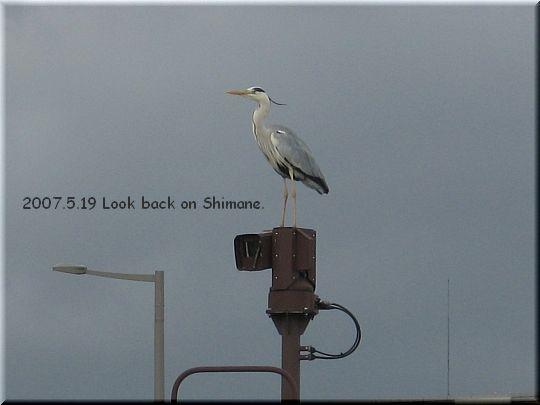 2007.05.19宍道湖鳥.jpg