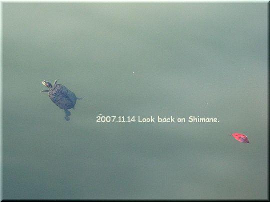 2007.11.14 松江城かめ.jpg