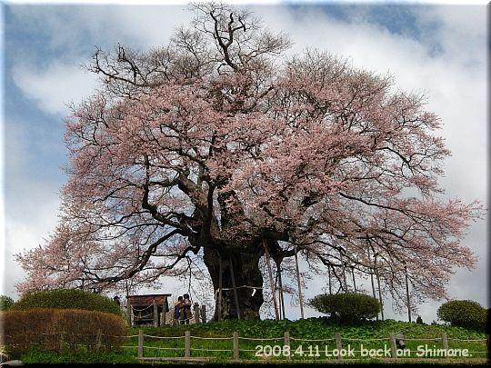 2008.04.11醍醐桜10.JPG