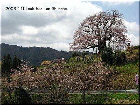 2008.04.11醍醐桜2.JPG