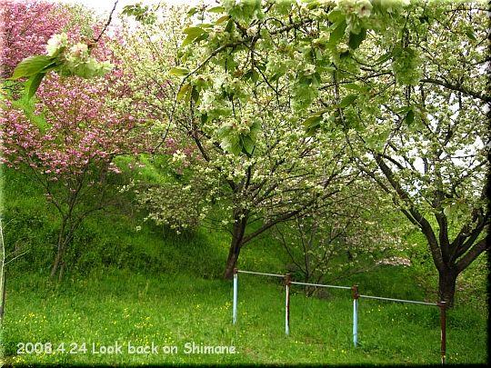2008.04.24三刀屋城跡公園6.JPG