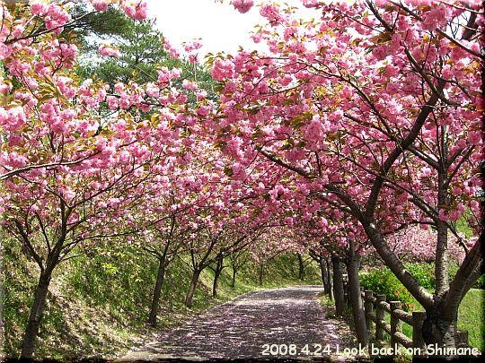 2008.04.24斐川公園4.JPG